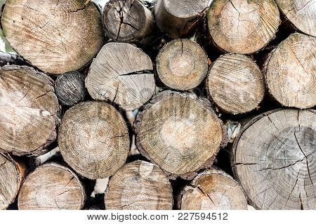 Woodpile In A Forest. Close Up View, Rustick Eco Background.