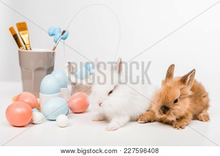 Cute Furry Rabbits And Painted Easter Eggs On White