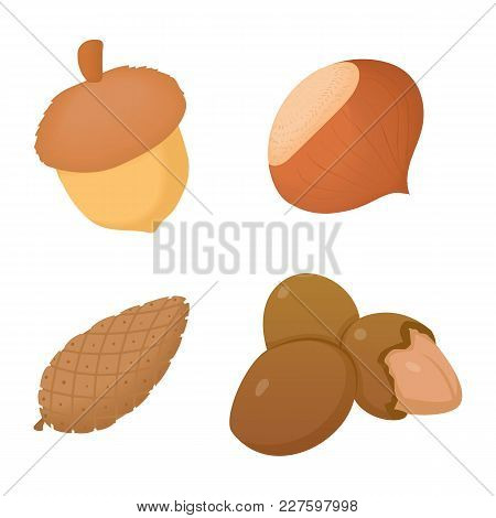 Nuts Icon Set. Cartoon Set Of Nuts Vector Icons For Web Design Isolated On White Background
