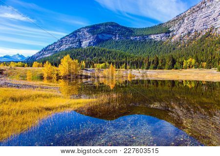 Yellow and orange colors of autumn in the Rocky Mountains. Mountains reflected in the smooth water of Lake Abraham. Concept of ecological and active tourism