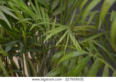 Close Up Of A Small Palm Tree Going Inside A Building