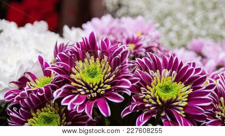 Close-up Of Chrysanthemum Flowers Bouquet In Flowers Shop