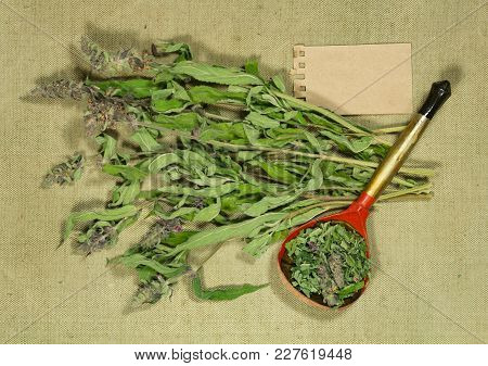 Sage, Salvia. Dry Herbs For Use In Alternative Medicine, Phytotherapy, Spa, Herbal Cosmetics. Prepar