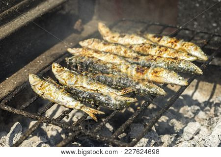 Delicious Barbecued Sardines - Traditional Food From Portugal