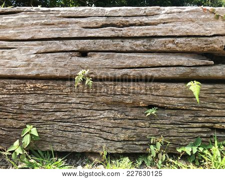 Rustic old wooden wall with growing fern and grasses.