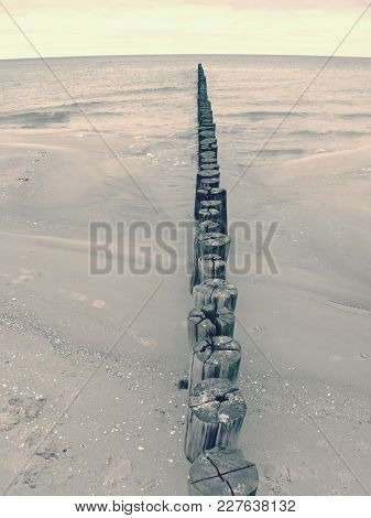 Mossy Breakwater Poles In Smooth Water Of Sea Within Windless. Sandy Beach Wit Algae, Stones And She