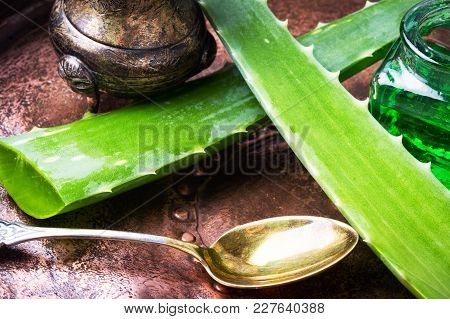 Close-up Aloe Vera Leaves