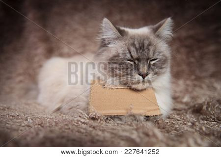 sleepy homeless  cat wearing a sign and is lying down on a furry background in studio