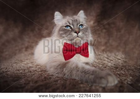 cool cat wearing red bowtie looks up while lying down on a fur background