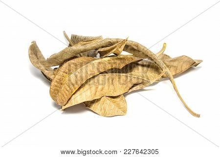 Dried Bay Leaf On White Background. The  Leaf Tree On White Background