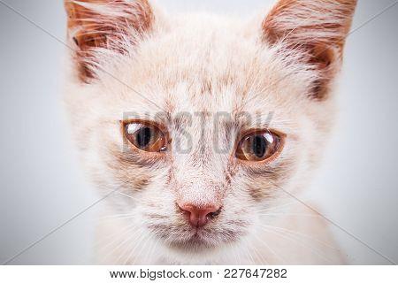 Sad Homeless Kitten Portrait, Close Up View