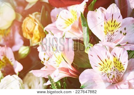 Flowers Beautiful Pink Lilies In A Bouquet