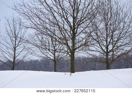 Panorama Of Bare Trees In Winter At Cloudy Day