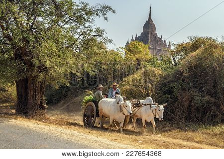 Bagan, Myanmar - January 23, 2016 : Ox Cart Carrying Burmese Family On Dusty Road Around A Temple In