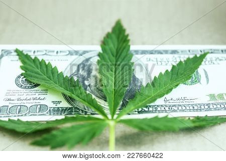 Money Sheet Of Marijuana, Cannabis Close-up. One Hundred Dollar Bill Of The Usa Franklin. Concept Of