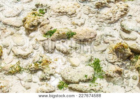 Stones And Seaweed On The Seabed At Low Tide In The Caribbean Sea.