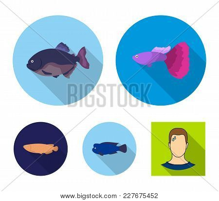 Frontosa, Cichlid, Phractocephalus Hemioliopterus.fish Set Collection Icons In Flat Style Vector Sym
