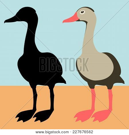 Black Bellied Whistling Duck Vector Illustration Flat Style    Black Silhouette