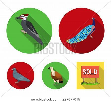 Peacock, Woodpecker And Various Species. Birds Set Collection Icons In Flat Style Vector Symbol Stoc
