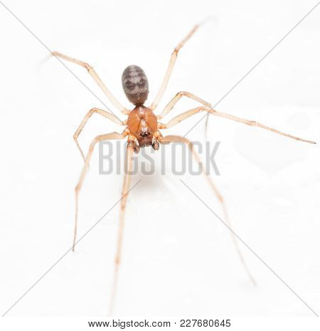 Spider On A White Background With Water Drops .