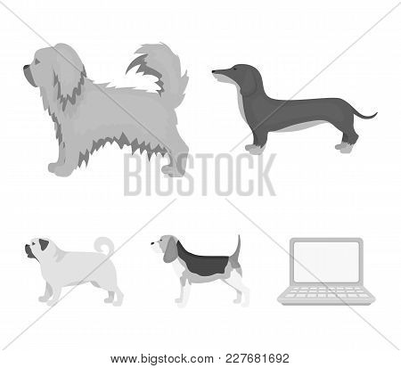 Pikinise, Dachshund, Pug, Peggy. Dog Breeds Set Collection Icons In Monochrome Style Vector Symbol S