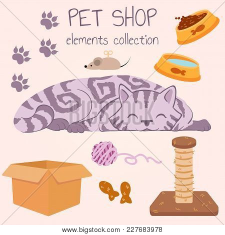Happy Gray Striped Cat Sleeping. Pet Shop Poster Design With Many Accessories. Vector Illustration.