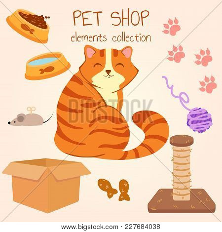 Happy Red-haired Fat Cat Sitting And Smiling. Pet Shop Poster Design With Many Accessories. Vector I