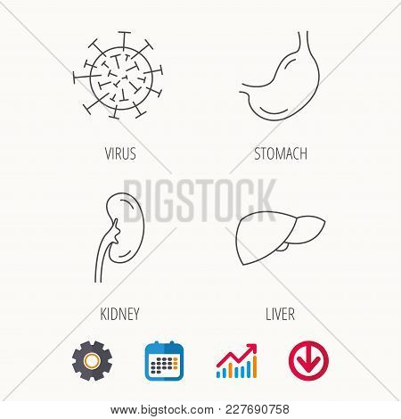 Virus, Stomach And Kidney Icons. Liver Linear Sign. Calendar, Graph Chart And Cogwheel Signs. Downlo