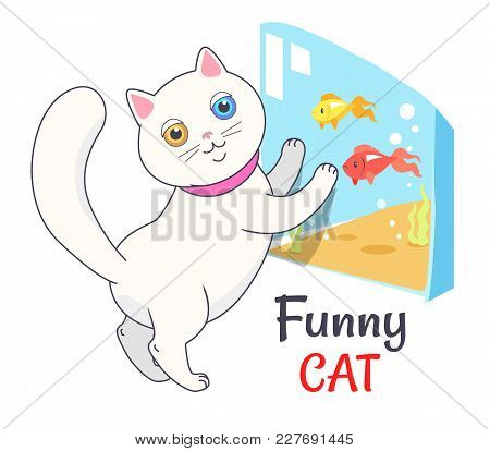 Funny White Cat Looking At Aquarium With Fish, Transparent Tank With Water And Cute Feline Kitten In