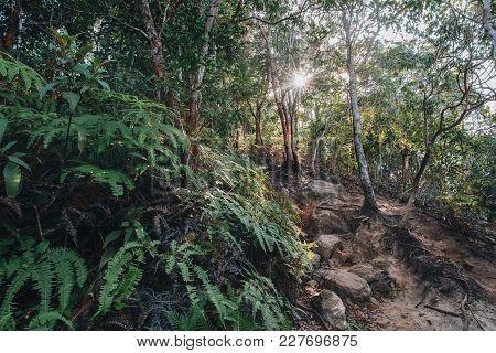 Beautiful Green Trees And Fern In Krabi, Thailand