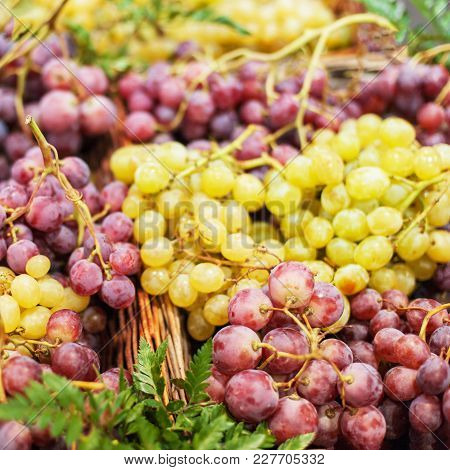 Grapes Background. Organic Ripe Red And White Grape   At  Market. Harvesting Concept. Grape In A Loc