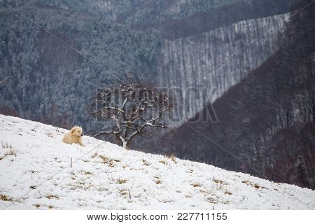Rural landscape of the romanian sheepfold, at Sibiu county