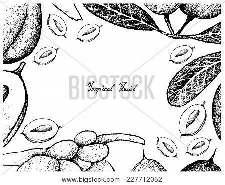 Tropical Fruits, Illustration Frame Of Hand Drawn Sketch Fresh Karanda Or Carissa Carandas And Coco
