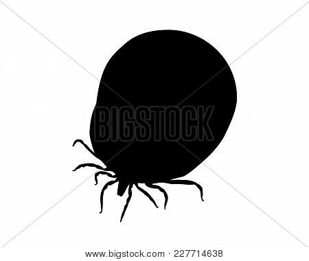 Detailed And Accurate Illustration Of Silhouette Of A Soaked Tick On White Background