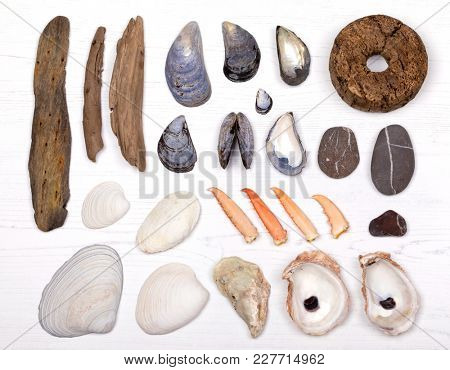 An overhead view of a collection of mussel, clam and oyster shells, lobster claws, pebbles, driftwood and a fishing net float. Flat lay design in a square over bleached white wood background.
