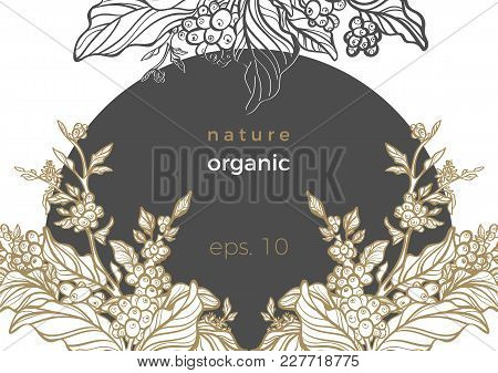 Vector Art Frame In Circle Realistic Branch Of Coffee Branch, Leaf, Bean, Flower Botanical Draw Flor
