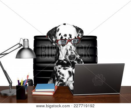 Dalmatian Dog In Glasses Is Doing Some Work On The Computer. Isolated On White Background