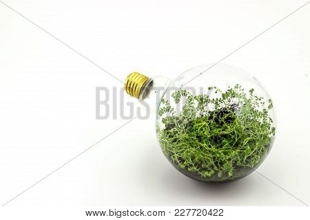 Incandescent Bulbs With Plants Planted Inside.