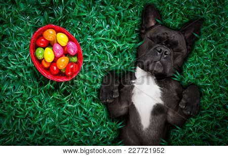 Funny  Happy French Bulldog  Easter Bunny  Dog With A Lot Of Eggs Around On Grass  And Basket , Slee
