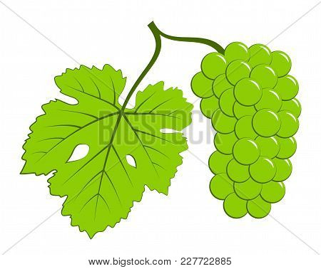 Vector Grape With Leaf Isolated On White Background