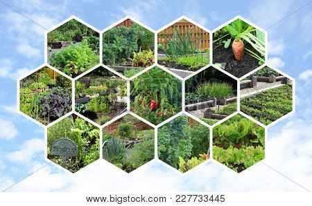 Photo collage of a variety of organic vegetable, fruit and herb gardens in summer.