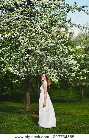 Beautiful Blonde Girl In White Dress Is Posing Near A Flowering Tree In Park.