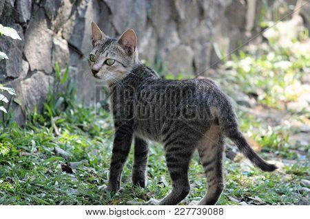 Street Tabby Cat - Selective Focus On The Face