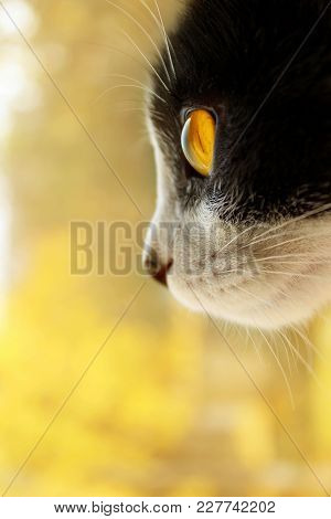 Cropped shot of a black cat. cat looking to the side. Cat Close-up, yellow blurred background.Cat. T