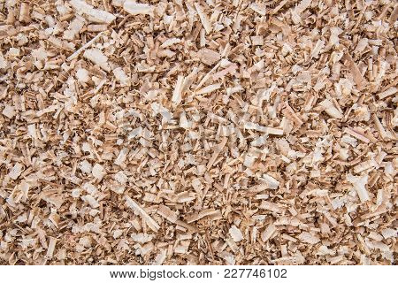 Wooden Shavings Of Oak And Pine, Background And Texture, Copy Space
