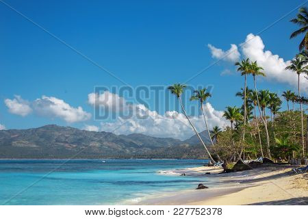 Perfect Caribbean Landscape With High Palm Trees. Vacation Concept, Dominican Republic