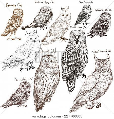 Illustration drawing style of owl birds collection