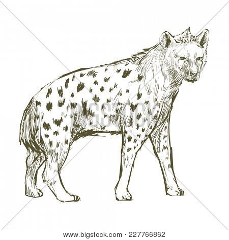 Illustration drawing style of hyena