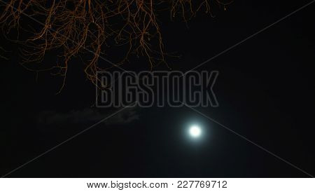 Night Sky, Forest And Moon. Sky At Night.