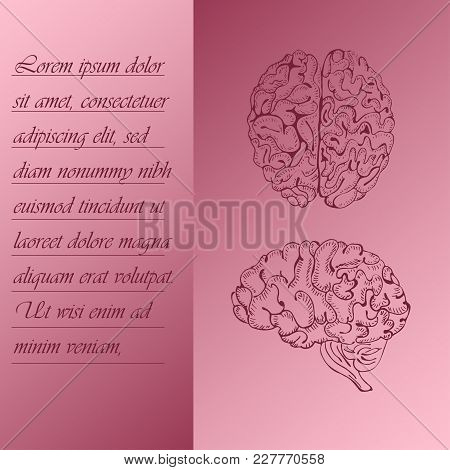 Two Section Poster About Human Brain With Place For Text. Hand Drawn Human Brain. Human Anantomy Vec